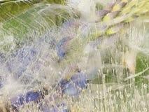 Abstraktion vom gefrorenen organischen Gemüse Stockfotos