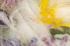 Abstraktion von den gefrorenen Blumenblättern Lizenzfreie Stockfotos