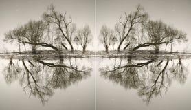 Abstraktion von den Stämmen von Bäumen Stockbild