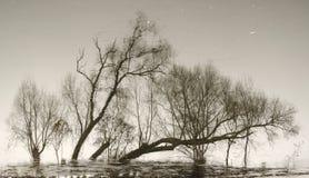 Abstraktion von den Stämmen von Bäumen Stockfotos