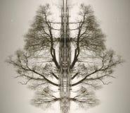 Abstraktion von den Stämmen von Bäumen Stockfoto