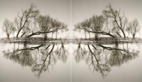 Abstraktion von den Stämmen von Bäumen Lizenzfreies Stockbild