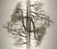 Abstraktion von den Stämmen von Bäumen Lizenzfreie Stockfotos