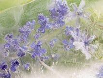 Abstraktion von den zerbrechlichen Lavendelblumen Lizenzfreie Stockfotos