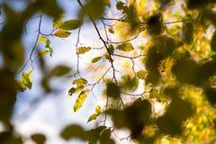 Abstraktion von der Natur Lizenzfreies Stockfoto