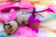 Abstraktion von farbigen Federn mit Wachteleiern Lizenzfreies Stockfoto