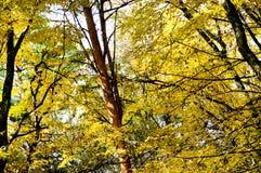 Abstraktion von gelben und grünen Blättern des Herbstes Lizenzfreie Stockfotos