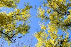 Abstraktion von gelben und grünen Blättern des Herbstes Lizenzfreies Stockfoto