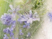 Abstraktion von hellen Lavendelblumen Stockbilder