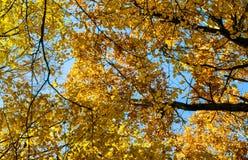 Abstraktion von Herbstgelbblättern Stockfotografie