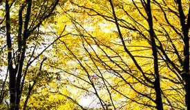 Abstraktion von Herbstgelbblättern Lizenzfreie Stockbilder