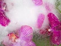 Abstraktion von purpurroten Orchideen Lizenzfreie Stockbilder