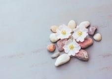 Abstraktion von rosa Steinen und von Blumen auf einem grauen Hintergrund mit Raum für Text Stockbild