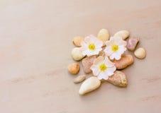 Abstraktion von rosa Steinen und von Blumen auf einem rosa Hintergrund mit Raum für Text Stockfoto