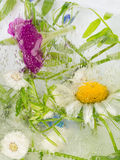 Abstraktion von Wildflowers Lizenzfreies Stockfoto