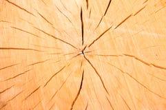 Abstraktionsbeschaffenheit des Baumstumpfs Stockbild