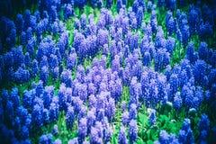 Abstraktionshintergrund viele blühenden purpurroten Glocken Lizenzfreies Stockfoto