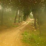 Abstrakty zamazujący marzycielskiej tajemnicy drewna, czarodziejscy błyskotliwości bokeh światła i filtrujący wizerunek i texture Obraz Stock