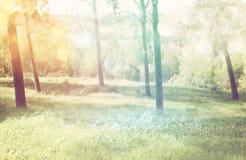 Abstrakty zamazujący marzycielskiej tajemnicy drewna, czarodziejscy błyskotliwości bokeh światła i filtrujący wizerunek i texture Obraz Royalty Free