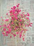 Abstrect poot природы внешнее Стоковые Фотографии RF