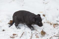 Abstreifen gemischter Zuchthund Stockfoto