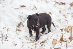 Abstreifen gemischter Zuchthund Lizenzfreies Stockfoto