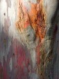 Abstreifen herauf den falschen Baum Stockbilder
