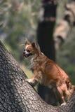 Abstreifen herauf den falschen Baum Lizenzfreie Stockfotos