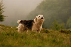 Abstreifenhund Stockfoto