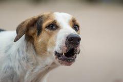 Abstreifenhund Stockbilder