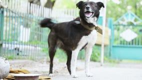 Abstreifenhund