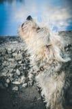 Abstreifenhund draußen Stockfotos