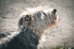 Abstreifenhund draußen Lizenzfreies Stockfoto