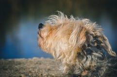 Abstreifenhund draußen Lizenzfreie Stockfotos
