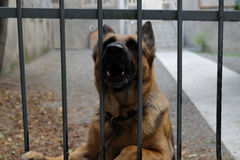 Abstreifenhund durch den Zaun Stockbilder
