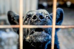 Abstreifenhund hinter dem Zaun Lizenzfreie Stockbilder
