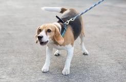 Abstreifenspürhund Lizenzfreie Stockfotografie