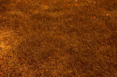 Abstrtact autumn burned grass Royalty Free Stock Images