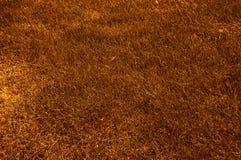 Abstrtact Herbst gebranntes Gras Lizenzfreie Stockbilder