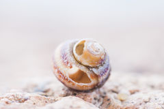 Abstruct detailed photo of old damaged spiral snail shell Stock Images