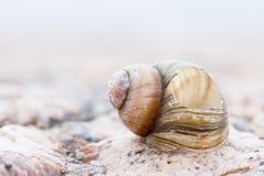 Abstruct ha dettagliato l'immagine della foto di vecchie coperture a spirale nocive della lumaca Immagine Stock Libera da Diritti