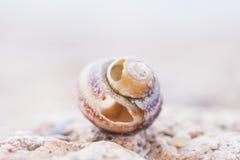 Abstruct ha dettagliato la foto di vecchie coperture a spirale nocive della lumaca Immagini Stock
