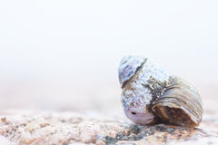 Abstruct photo of old spiral snail shell Stock Image