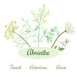 Absyntów ziele składniki Zdjęcie Stock