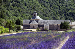 Abtei des Lavendels Stockfotografie