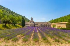 Abtei von Senanque und von Blühen rudert Lavendelblumen Gordes, Luberon, Vaucluse, Provence, Frankreich Stockfoto