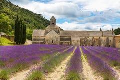 Abtei von Senanque und von Blühen rudert Lavendelblumen Stockfotografie