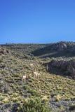 Abteilung von Las Heras in Mendoza, Argentinien Lizenzfreies Stockbild