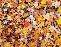 Abtract五颜六色的充满活力的秋叶例证形象艺术背景 向量例证