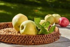 Abtropfbrett mit kürzlich geernteten Äpfeln auf Holztisch Stockfotografie